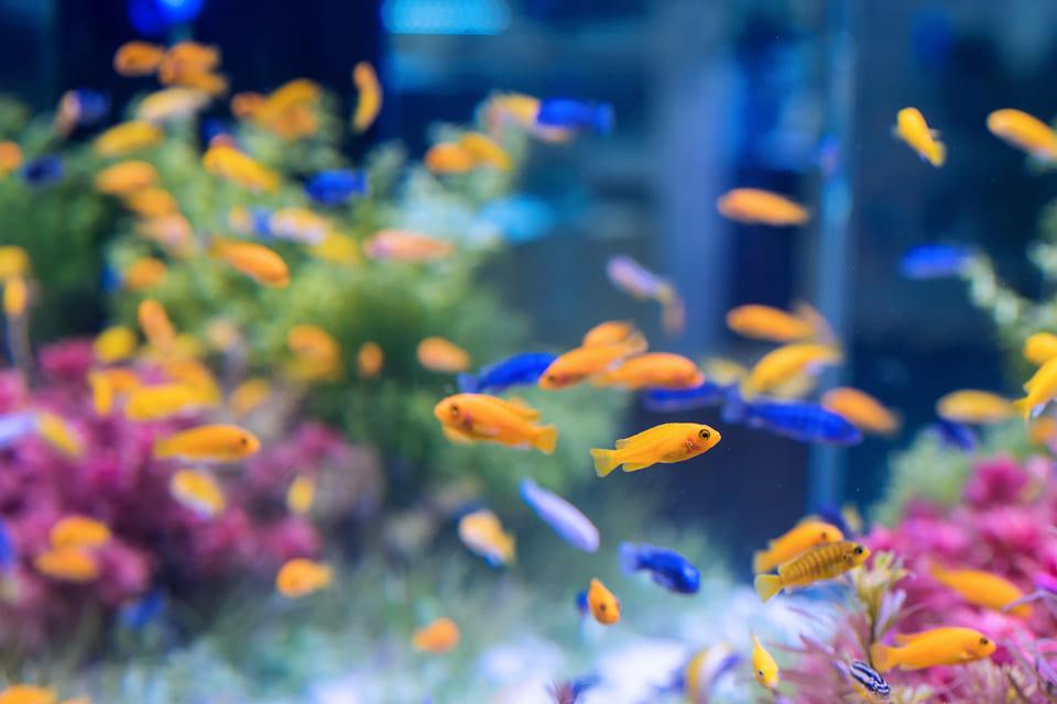Ідеї для бізнесу 2021: Розведення акваріумних рибок