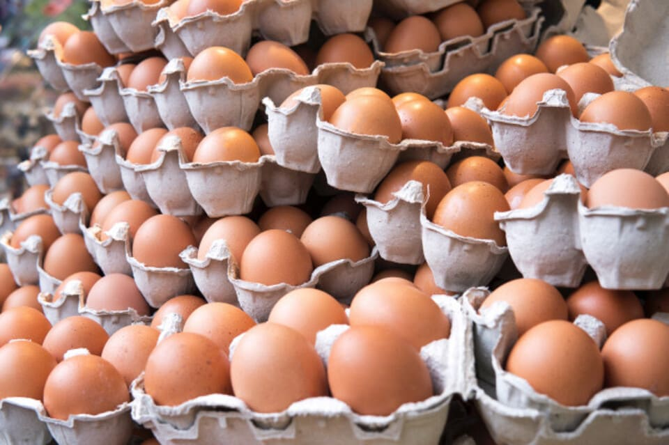 Бізнес на курячих яйцях