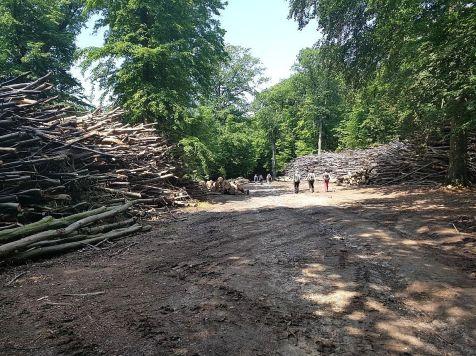 Pod Močiarnou si lesáci urobili veľkú skládku vyťaženého dreva.