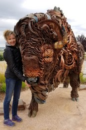 Finally, a bison without flies