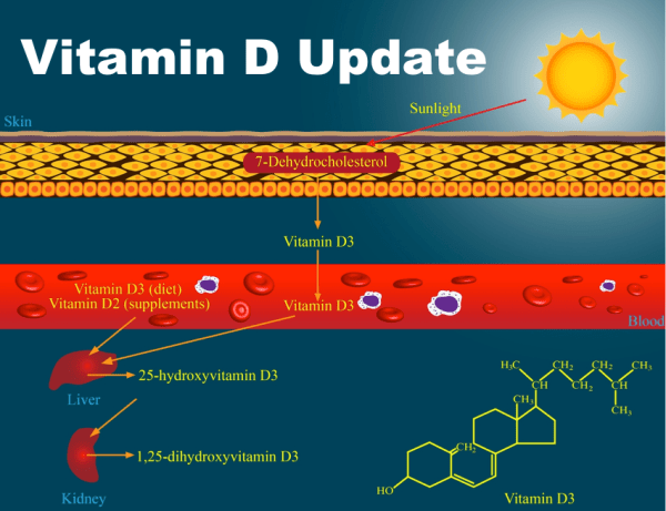 Vitamin D Update October 2014
