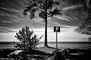 Tree-parking in Bjärred, Sweden