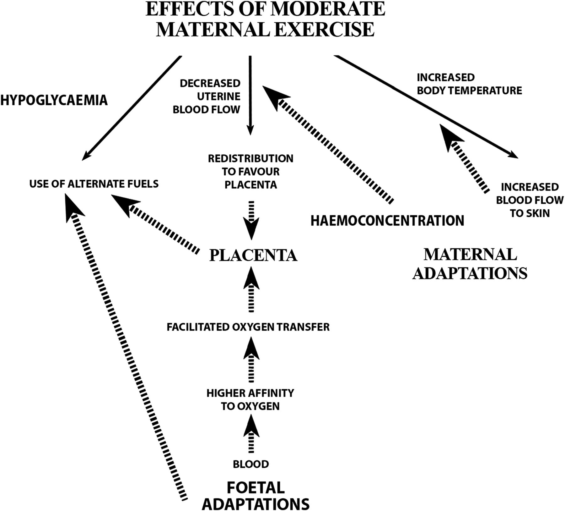 Exercise And Pregnancy In Recreational And Elite Athletes