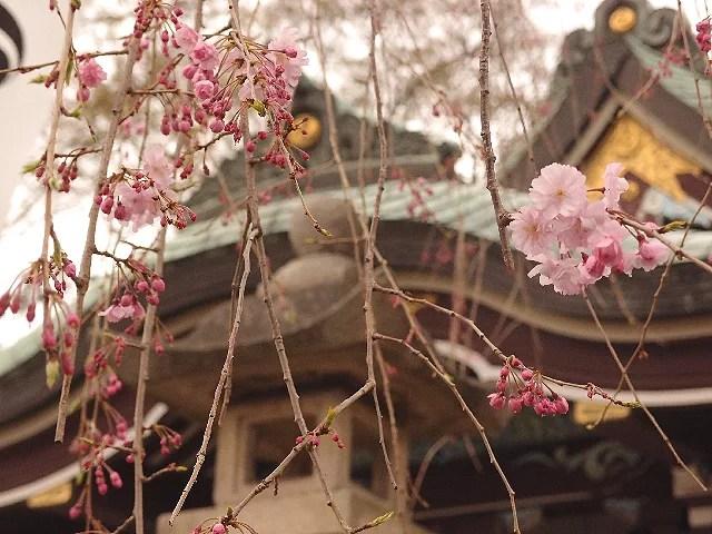 ⑩3月末には桜の名所に