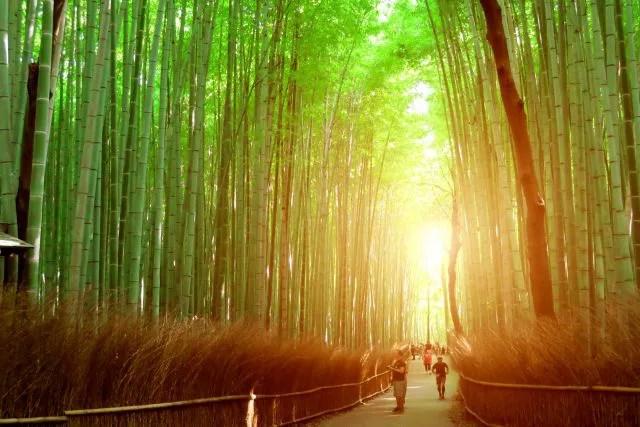 京都絶景撮影スポット④静寂な雰囲気!嵐山の竹林