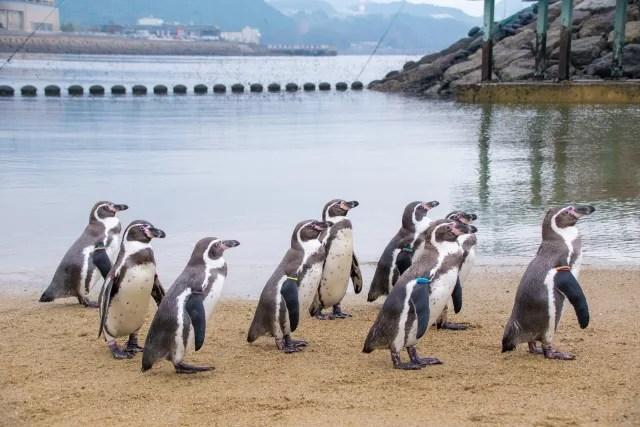 長崎県デートスポットランキング③たくさんのペンギンたちに触れ合える!長崎ペンギン水族館