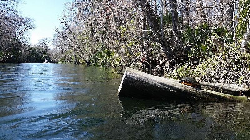 econ kayaking trip orlando