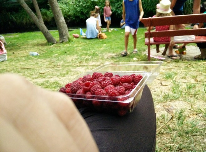 Raspberries on the lawn of the Christchurch Riccarton Bush farmers market