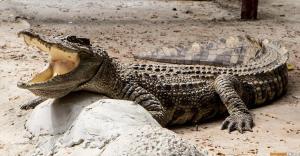 Храм крокодила — Ват Чакрават