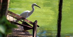 Цапля в парке Люмпини (Lumphini Park)