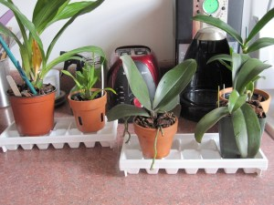 DIY orchid humidity tray