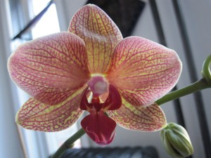 Beautiful orchid bloom