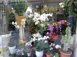 Orchids in a Venice flower shop