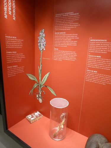 An orchid specimen on display