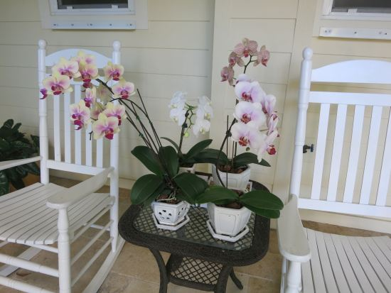More Ocean House orchids