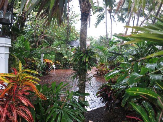 Audubon House orchids