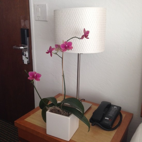 Avalon room orchid