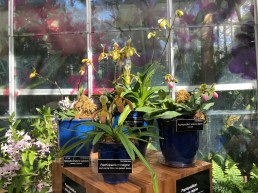 Lady slipper orchid display