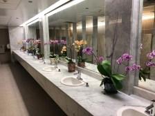 Orchid bathroom display