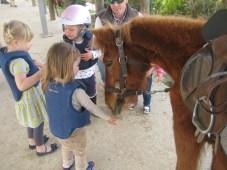 Nora feeding the horse.