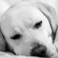 #180: Sleepy Time