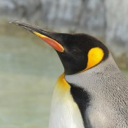 #170: Why Are You Calling Me Penguin?