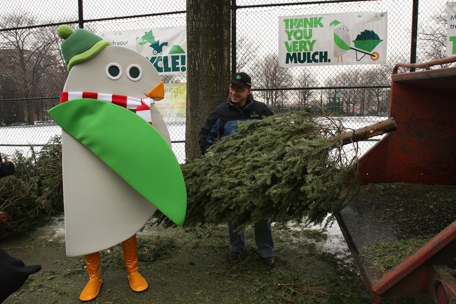 recycling, tree recycling