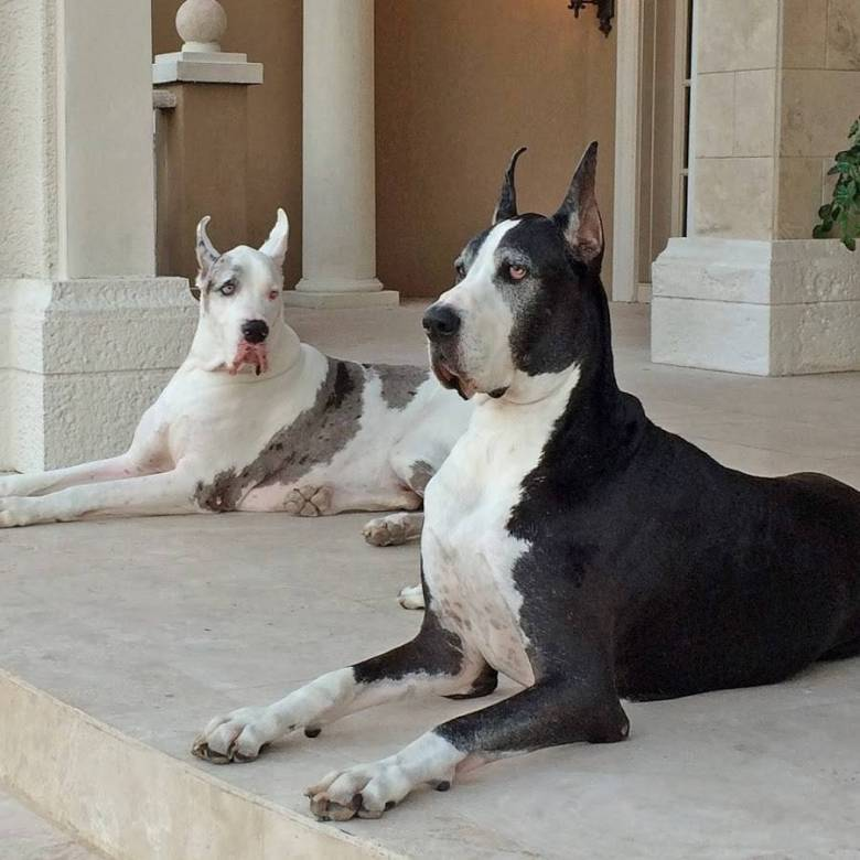 popular dog breeds for the city