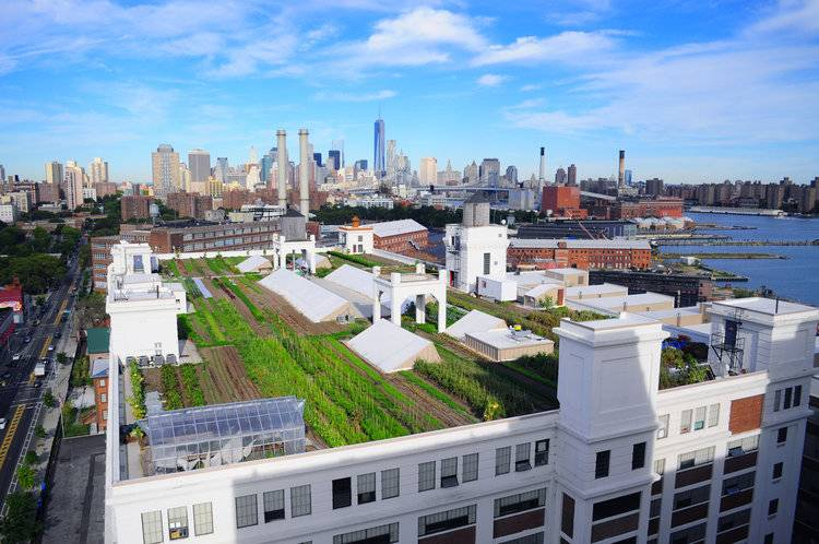 Brooklyn Grange, one of the world's largest rooftop farms atop the Brooklyn Navy Yard