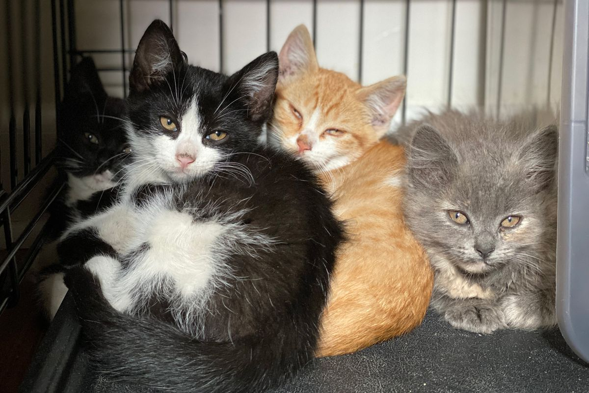 How the Pandemic Pause on Free Spay and Neuter Clinics Led to a Cat-astrophe