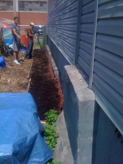 Starting a sunflower wall