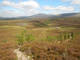 Looking back from the path up Meall a' Bhuachaille over Ryvoan and Lochan a' Chait.