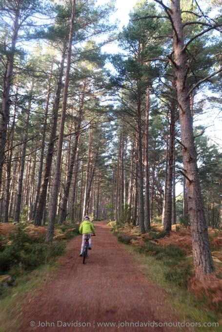 Heading through the trees towards Coylumbridge on the way back down.