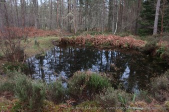 A little pond with an orienteering marker beside it makes a nice focal point on the walk.