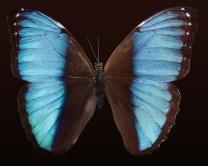 butterfly-176133_1920