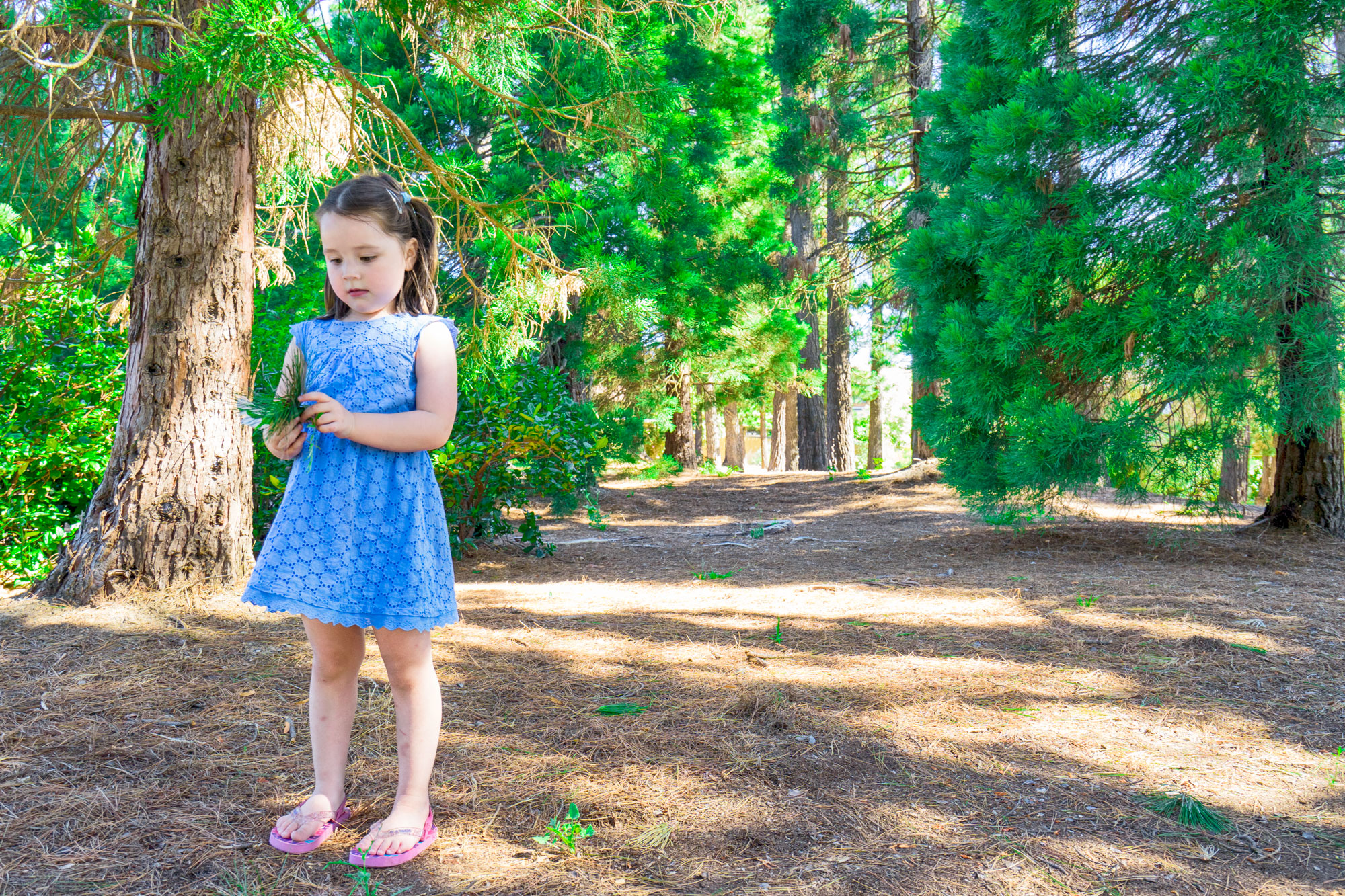 girl playing with pine tree during family portrait session professionally by Black Avenue Productions
