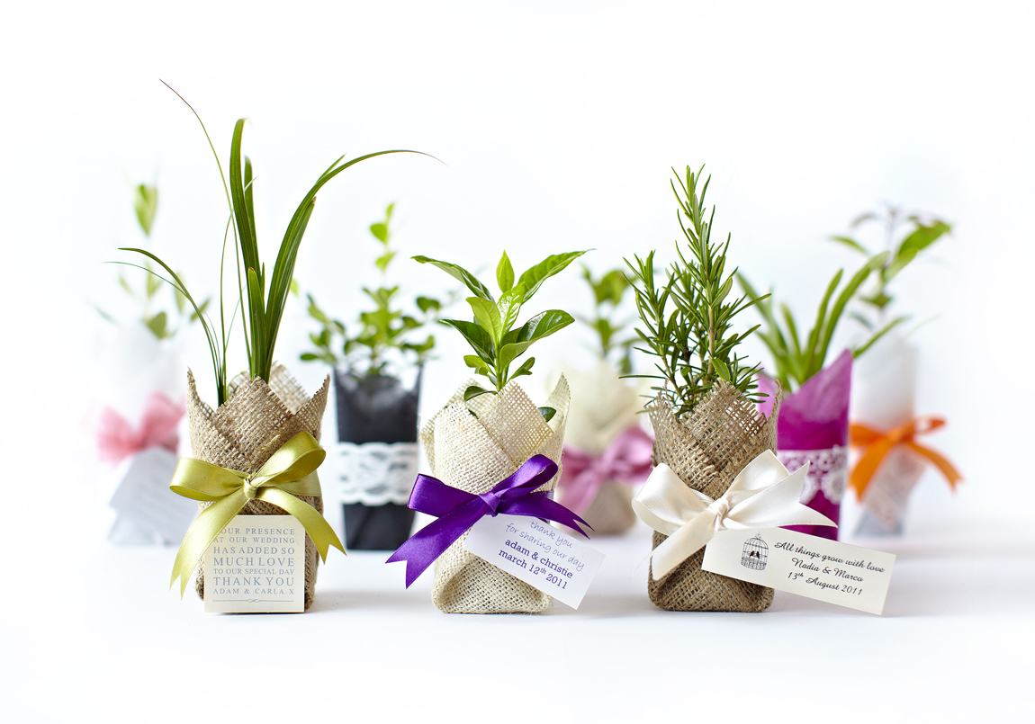 Gift plants as Bomboniere and Wedding favours idea in Melbourne 2018