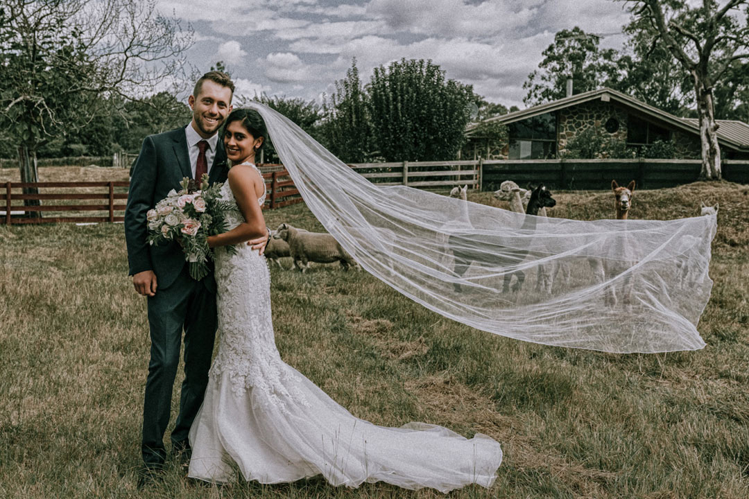 dreamy wedding photo of beautiful husband and wife flying veil with alpacas background in rustic farm wedding Melbourne