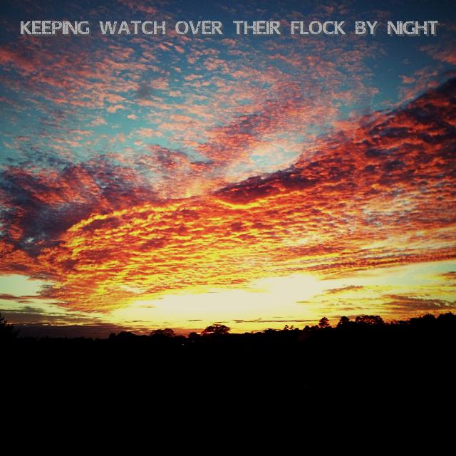 Flock by night