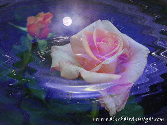 In Memoriam © 2004 Jane Waterman