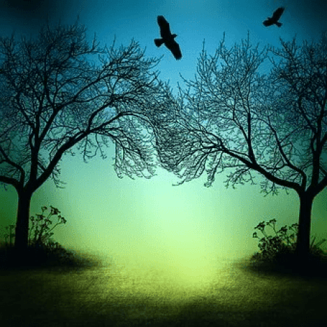 Blackbirds Writers soaring