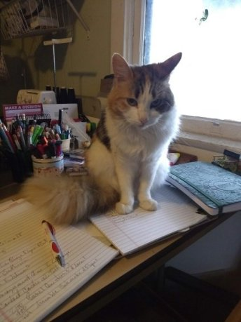 Anne Louise Bannon's cat, Benzi, sitting on a desk looking annoyed