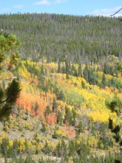 Colorful hillside with aspens