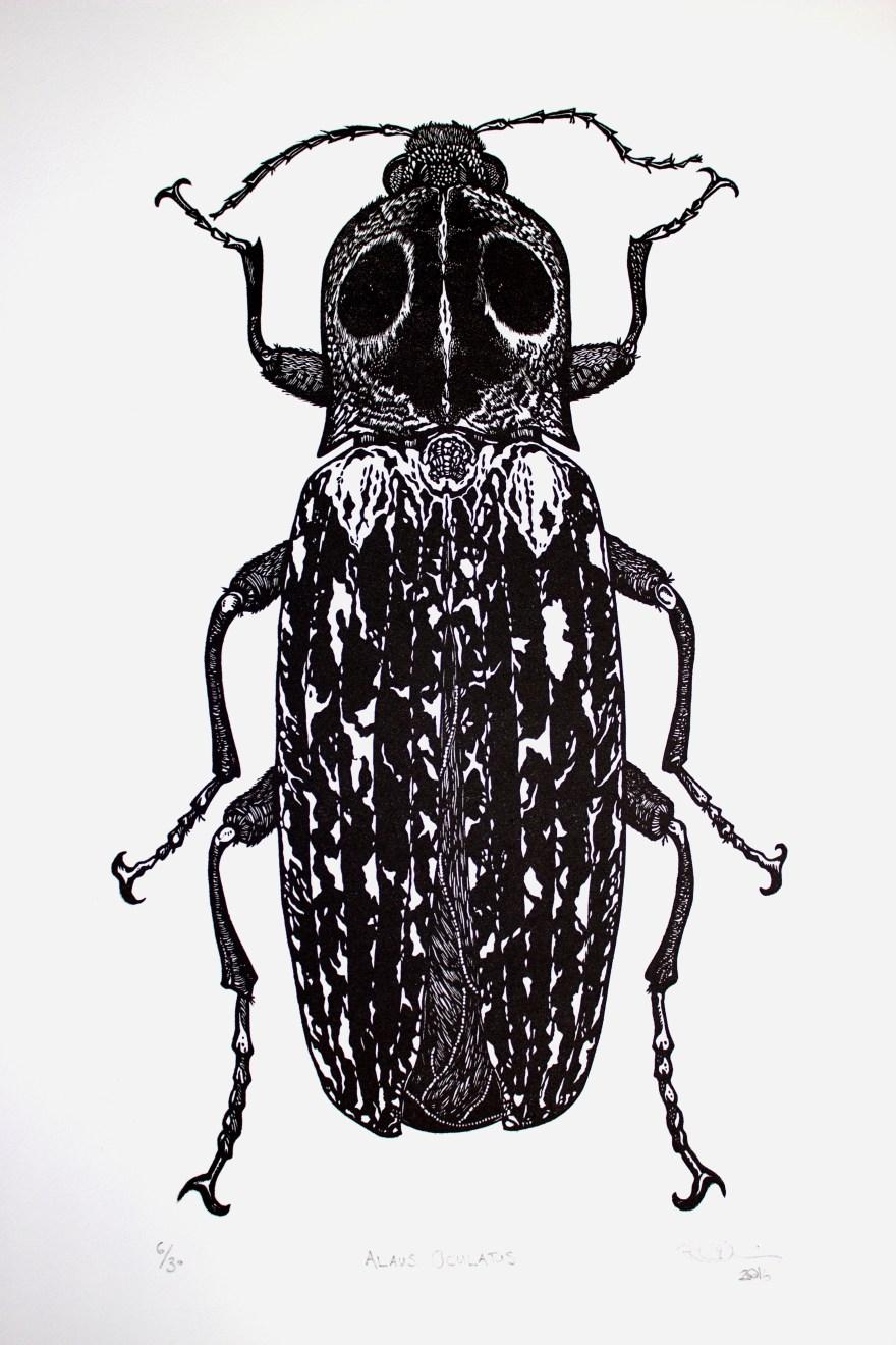click-eye-beetle-1