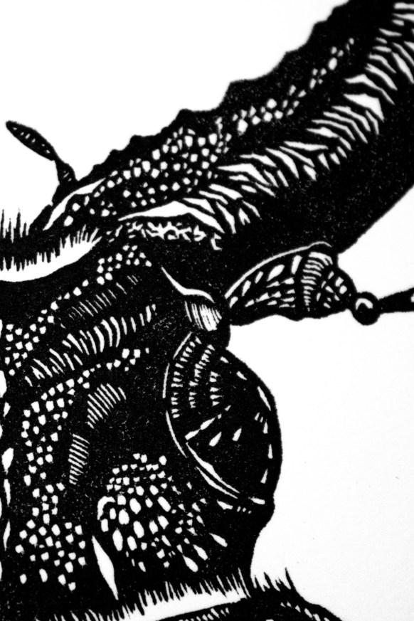macrodontia-cervicornis-3