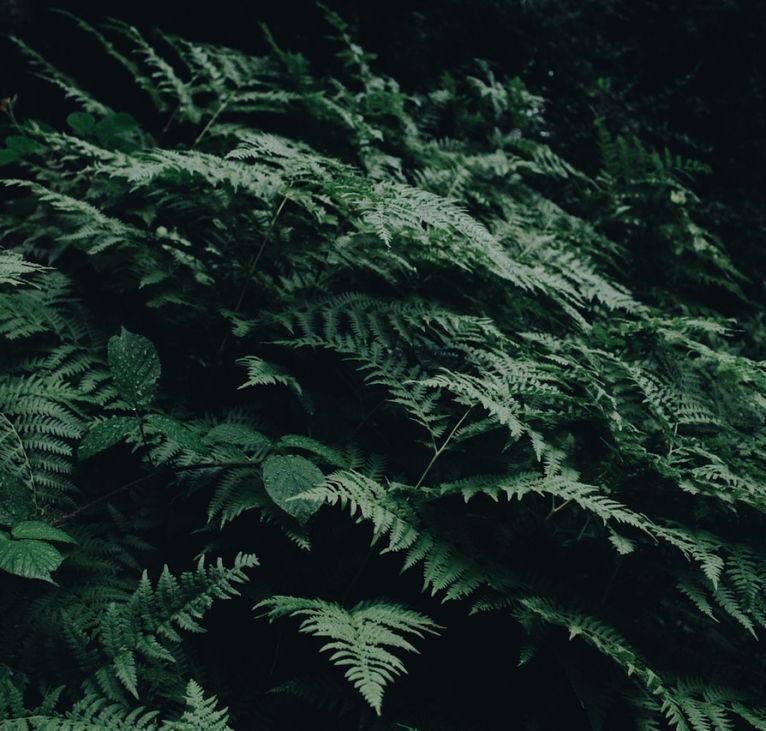 green-fern-plants-1028223-766x731