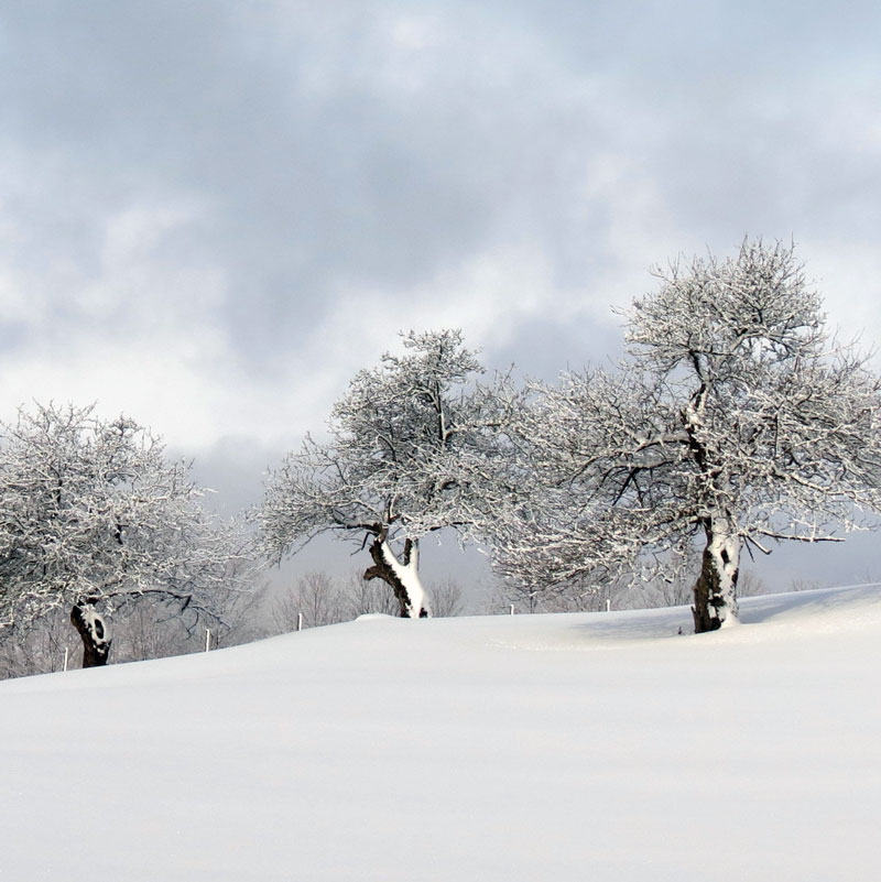 winter-tree-care