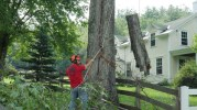 Tree Removal Vermont