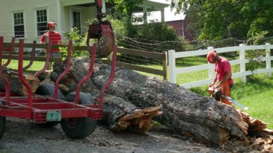 Tree removal and cleanup