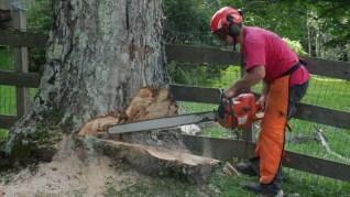Tree removal company Wilmington VT